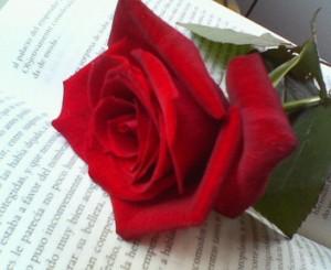 libro y rosa